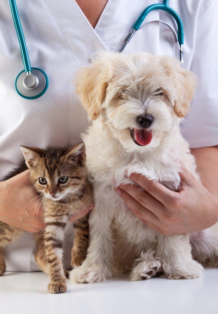 cao-gato-veterinario-castracao