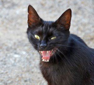 gatos-agressivos-02