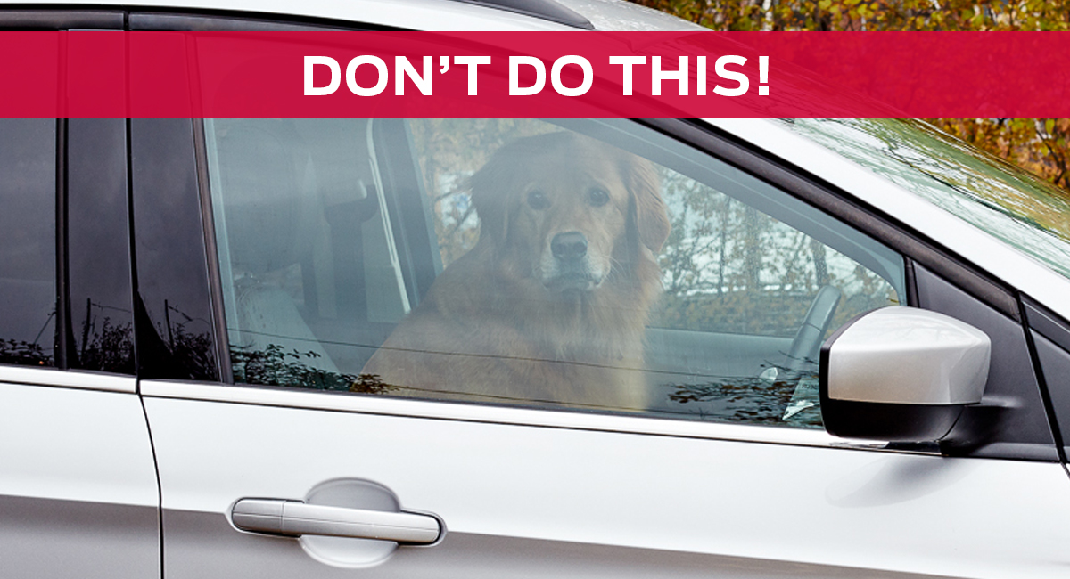 Ford_Blog_Dogs_Dont2
