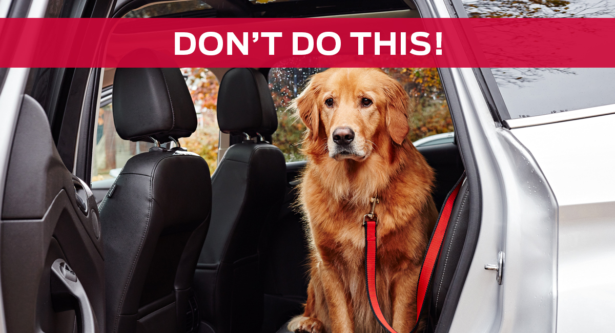 Ford_Blog_Dogs_Dont3