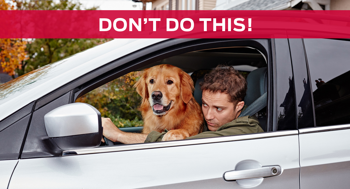 Ford_Blog_Dogs_Dont_1