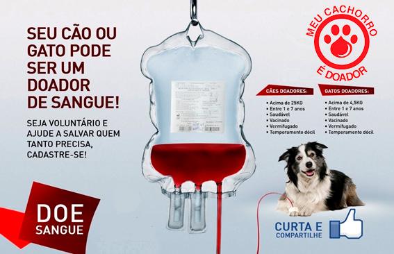 meu-cachorro-doa-sangue